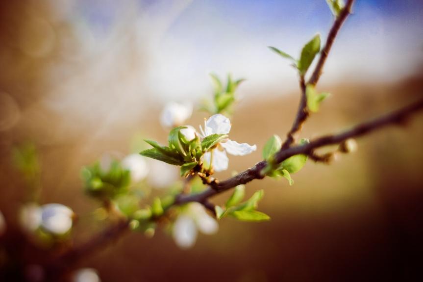 Limpieza de primavera. Descargablesgratuitos
